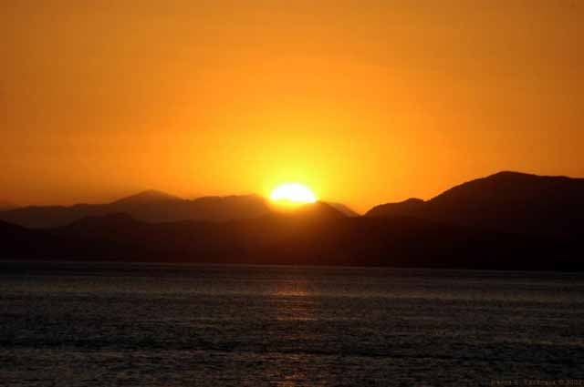 Sunset Hydra -